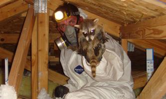 Oakland Animal Removal Opossum Squirrel Wildlife